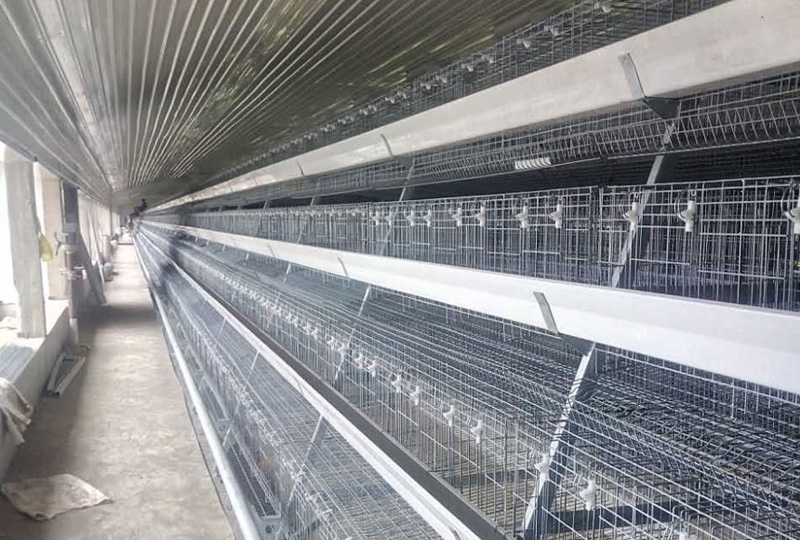 Steel Structure Layer Chicken House
