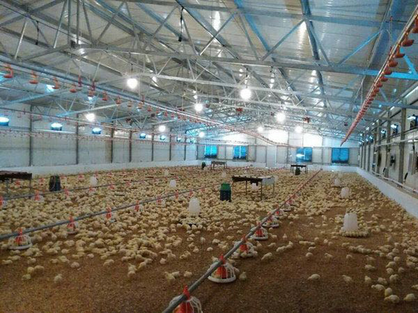Broiler Chicken House
