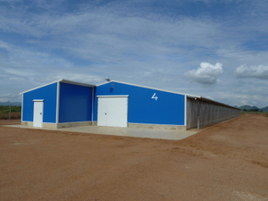 Chicken Poultry Farm Building